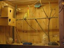 Arte animale della famiglia del pappagallo della gabbia della casa dell'uccello delle finestre fotografie stock libere da diritti