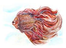 A arte aplicada tailandesa de combate vermelha da pintura dos peixes tem trajetos de grampeamento Imagem de Stock