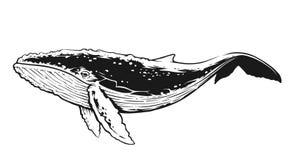 Arte in bianco e nero di vettore di contrasto della balena illustrazione di stock