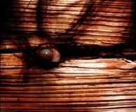 Arte Cd da tampa do olho do horror Imagem de Stock Royalty Free