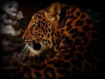 Arte cinese del leopardo Fotografie Stock Libere da Diritti