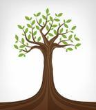 Arte conceptual frondosa da árvore de cinza verde isolada Imagens de Stock Royalty Free