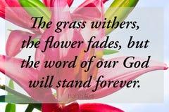 Arte cristiana dei lillies di scripture rosso della bibbia immagini stock