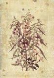 Arte d'annata botanica della parete di stile dei fiori con fondo strutturato Fotografie Stock Libere da Diritti