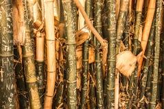 Arte da árvore Imagens de Stock