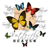Arte da borboleta do texto do slogan Ilustração Stock