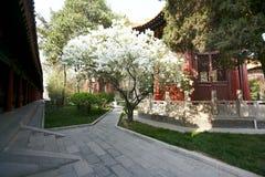 Arte da caligrafia no museu do beilin de Xian Foto de Stock