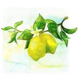 Arte da cozinha Ilustração tirada mão da aquarela de Fotos de Stock