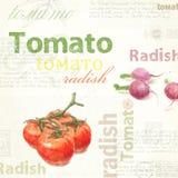 Arte da cozinha Tomate do vintage da aquarela Fotos de Stock Royalty Free
