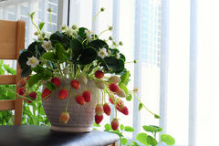 Arte da flor da argila, potenciômetro da morango para a decoração home imagem de stock royalty free