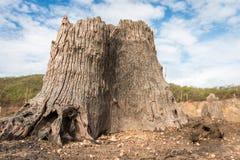 Arte da madeira lançada à costa em naturezas Fotografia de Stock Royalty Free