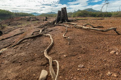 Arte da madeira lançada à costa em naturezas Imagem de Stock Royalty Free