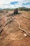 Arte da madeira lançada à costa em naturezas Imagem de Stock