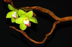 Arte da orquídea fotografia de stock royalty free