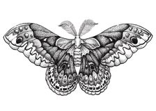 Arte da tatuagem da borboleta Tatuagem de Dotwork Cecropia do Hyalophora Traça de Cecropia Símbolo da liberdade, natureza, beleza Foto de Stock Royalty Free