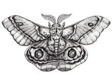 Arte da tatuagem da borboleta Tatuagem de Dotwork Suraka de Antherina Traça do bullseye de Madagáscar Fotografia de Stock