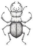 Arte da tatuagem do besouro de veado Cervus de Lucanus Tatuagem do trabalho do ponto inseto Símbolo da autoridade, da força, do p Fotos de Stock Royalty Free