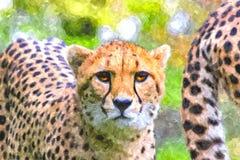 Arte de Digitaces - pintura de la acuarela de un guepardo que mira directamente la c?mara fotos de archivo libres de regalías