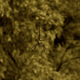 Arte de la araña Fotografía de archivo libre de regalías