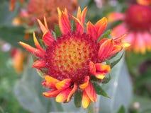 Arte de la flor Fotos de archivo libres de regalías
