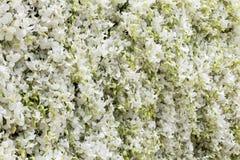 Arte de la flora y centro de flores con la orquídea blanca brillante para los vagos Imágenes de archivo libres de regalías