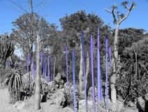 Arte de la naturaleza del desierto en azul Fotos de archivo libres de regalías