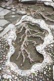 Arte de la raíz Imagen de archivo