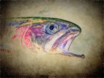 Arte de la trucha arco iris imagen de archivo
