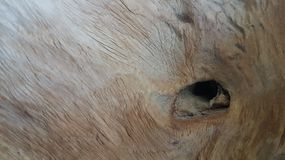 Arte de madera del diseño Fotografía de archivo libre de regalías
