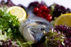 Arte dei pesci Fotografia Stock Libera da Diritti