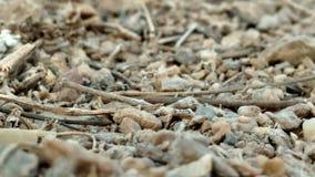Arte del deserto fotografia stock libera da diritti