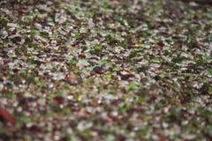 Arte del flowerbed del ciottolo della roccia del taglio di vetro Fotografie Stock Libere da Diritti