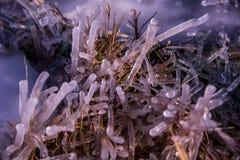 Arte del hielo Fotografía de archivo libre de regalías