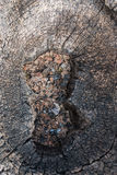 Arte del legname galleggiante sulle nature Fotografia Stock