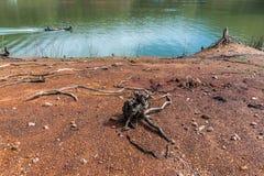 Arte del legname galleggiante sulle nature Fotografia Stock Libera da Diritti