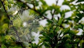 Arte del ragno Fotografia Stock Libera da Diritti