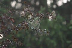 Arte del ragno Immagine Stock
