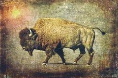 Arte della Buffalo - Bison Bull Fotografie Stock Libere da Diritti