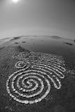 Arte della conchiglia di ostrica Immagine Stock