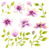 Arte della decorazione della carta da parati del fiore del fiore della magnolia della pittura dell'acquerello Illustrazione flore Fotografie Stock