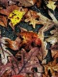 Arte della foglia Fotografia Stock
