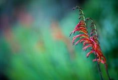 Arte della natura fotografia stock libera da diritti