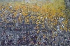 Arte della parete con il fungo giallo Fotografia Stock Libera da Diritti