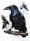 Arte della pittura dell'uccello del nero dell'acquerello di Raven Immagine Stock Libera da Diritti