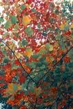 Arte di autunno delle foglie Immagini Stock