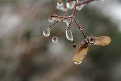 Arte di inverno dalla natura Fotografie Stock Libere da Diritti