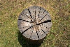 Arte di legno dovuto la natura fotografia stock libera da diritti