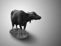 Arte do búfalo no fundo escuro Imagem de Stock