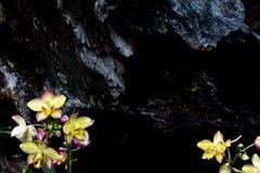 arte do fundo da flor da orquídea Fotos de Stock Royalty Free