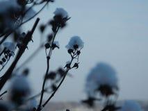 Arte do inverno Imagens de Stock Royalty Free